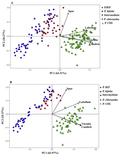 Principal component analysis (PCA) based on morphological flower characteristics of Platanthera allopatric taxa and sympatric population of Botton (A) and Bois Niau (B).
