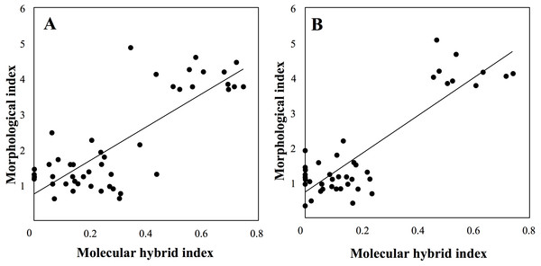 Correlation between molecular and morphological hybrid indices in sympatric sites (A: Botton; B: Bois Niau).