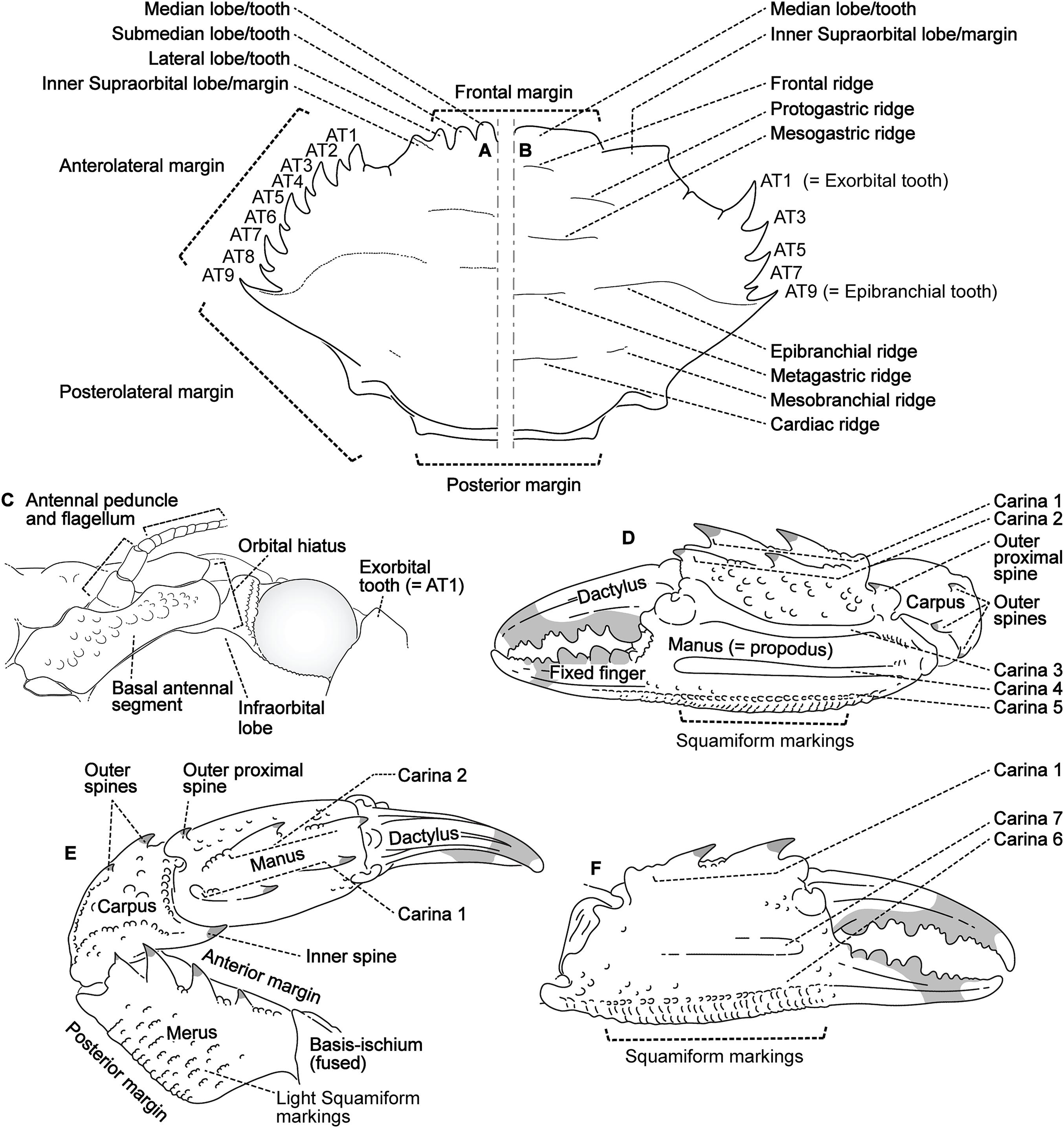 molecular phylogenetics of swimming crabs portunoidea rafinesque Global Hawk Block 20 download full size image