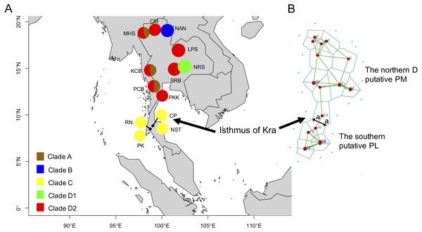 Clade distribution of the P. leucomystax. complex throughout Thailand (A) and the genetic differentiation across the Northern D clade (putative P. megacephalus; PM) and the Southern clade (putative P. leucomystax; PL) (B).
