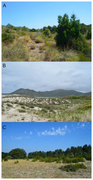 Examples of habitats occupied by the studied species.