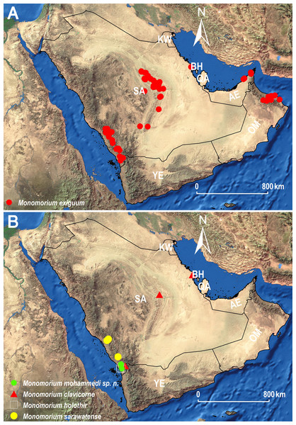 Distribution maps showing the known distribution ranges of the treated species on the Arabian Peninsula, except for M. aeyade Collingwood & Agosti, for which no exact locality data exists.