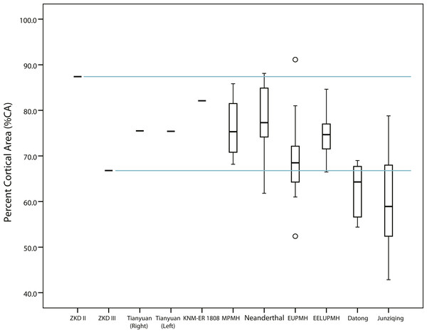Box plots of percent cortical area (%CA) in humeral midshaft cross sections reported in Tables 1 and 2.