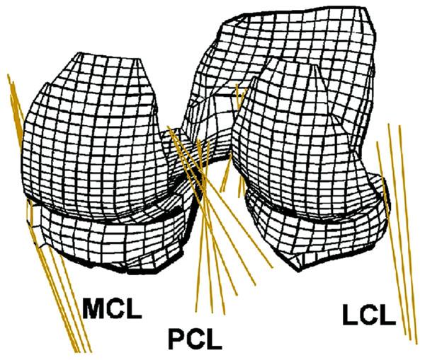 Human knee finite element mesh.