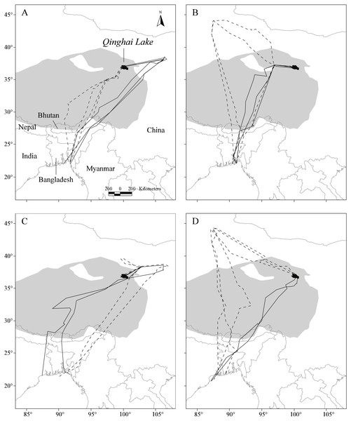 Map showing the repeat migration tracks of four Pallas's Gulls between Qinghai Lake, China, and Bangladesh Bay determined by satellite telemetry during 2006–2009.