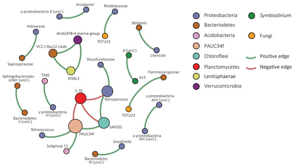 Co-occurrence network of S. siderea associated microbes.