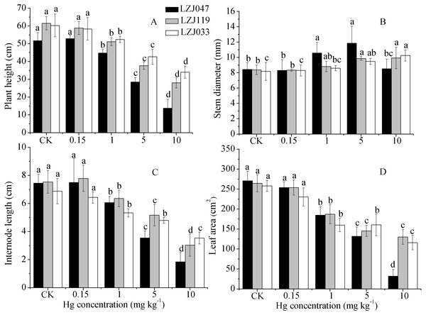 The effects of mercury stress on plant height (A), stem diameter (B), internode length (C) and leaf area (D) of LZJ047, LZJ119 and LZJ033 after six months of cultivation.