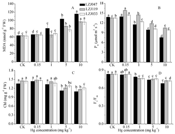 The effects of mercury stress on MDA content (A), Pn (B), chlorophyll content (C) and Fv∕Fm (D) of LZJ047, LZJ119 and LZJ033 after two months of cultivation.