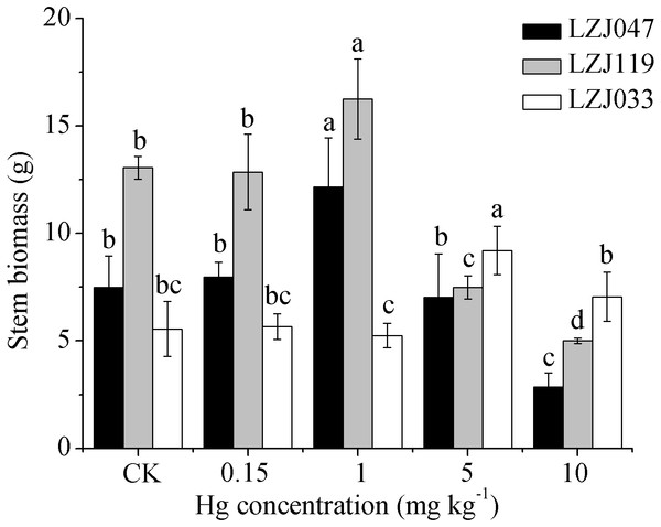 The effects of mercury stress on stem biomass of LZJ047, LZJ119 and LZJ033.