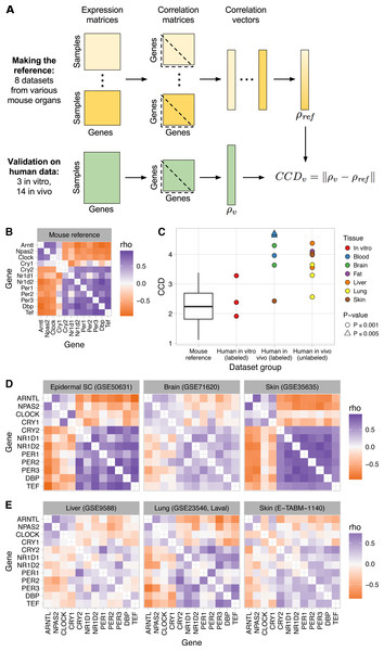 Consistent patterns of clock gene co-expression in mice and humans.