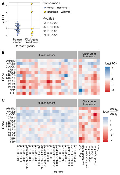 Changes in clock gene expression in human cancer are distinct from those caused by knockout of the clock genes in mice.