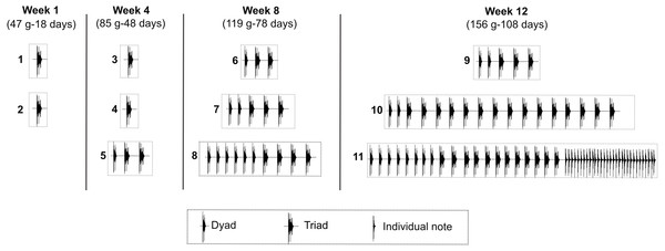Development of the long-range vocalization (LRV).