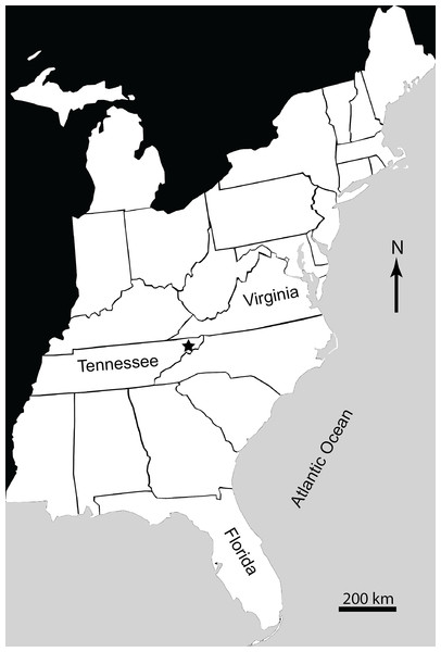 Map of Eastern United States showing location (marked by a star) of Gray Fossil Site in Washington County, East Tennessee, USA.