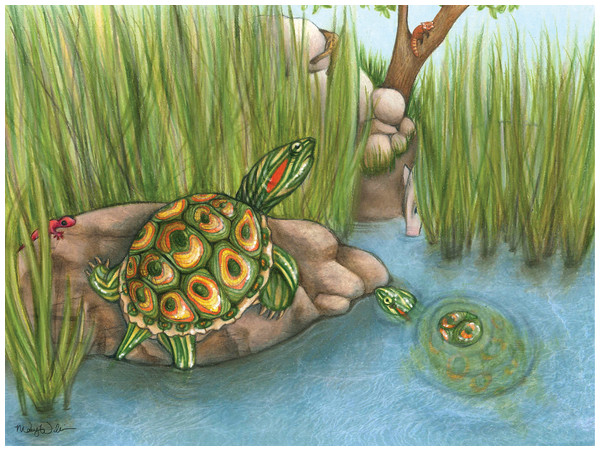 Life reconstruction of Trachemys haugrudi during the late Hemphillian at the Gray Fossil Site in eastern Tennessee.