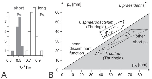 Ichnotaxonomic composition of Ichniotherium and the variability in pedal toe lengths IV and V as a diagnostic criterion.
