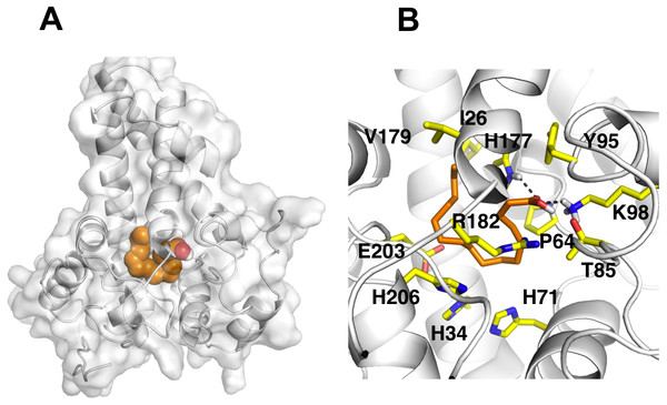 Docking studies of the 3D structure of palmitic acid onto the predicted model of the Δ9-fatty acid desaturase.