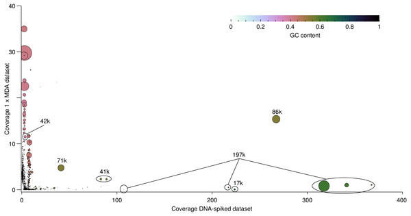 Differential coverage of the viral contigs assembled using a combination of the DNA-spiked sample and the 1 ×MDA sample with each individual read sets.