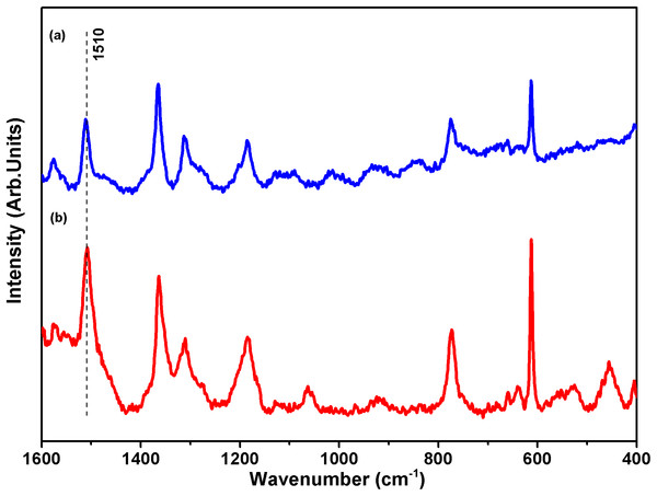 Surface-enhanced Raman scattering (SERS) spectra of rhodamine-6G (R6G).