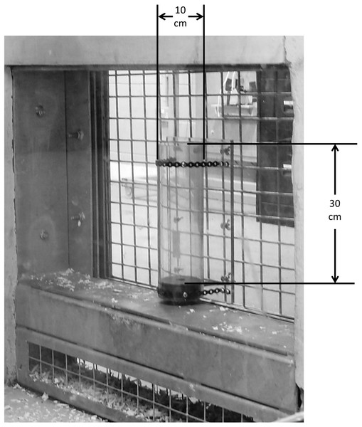 Image of the apparatus as presented to chimpanzees.