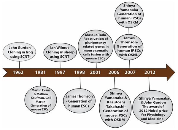 Historical timeline showing events that led to the development of iPSCs.