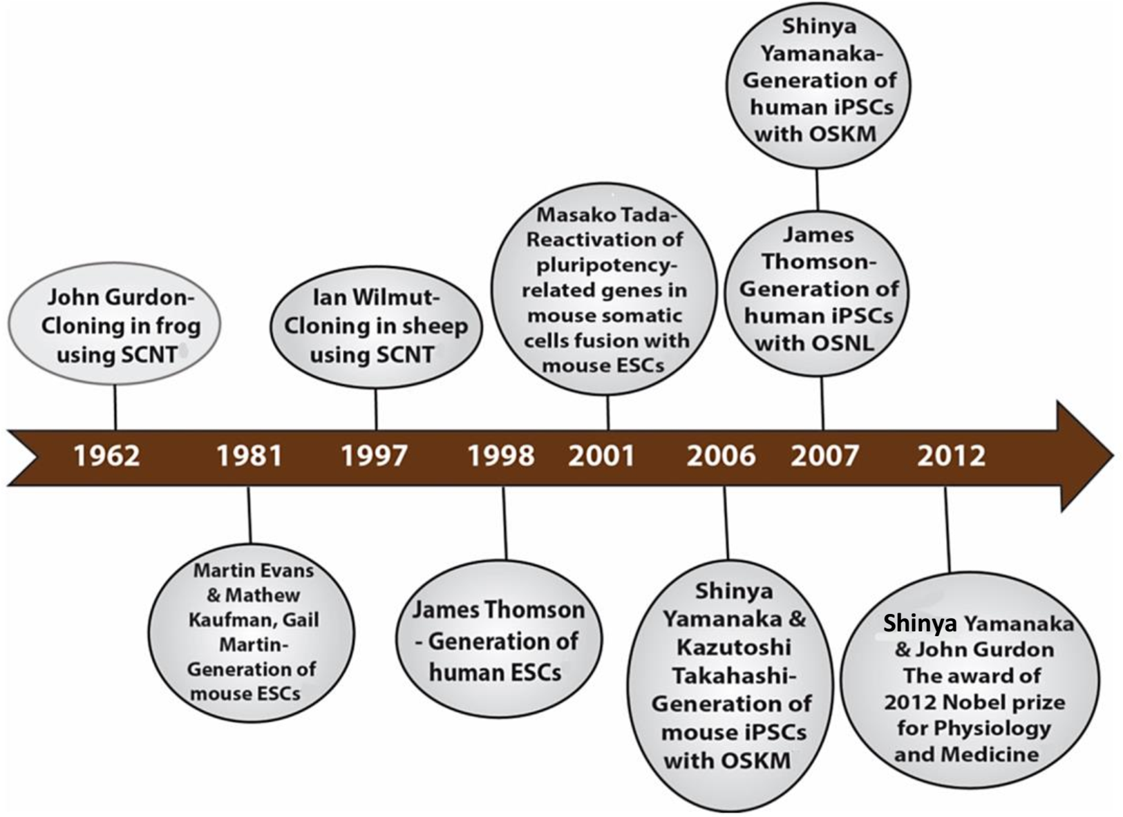 Ten Years Of Progress And Promise Induced Pluripotent Stem Cells Fuse Box B Q Download Full Size Image
