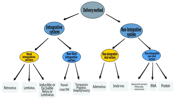 Schematic representation of various delivery methods of iPSC induction.