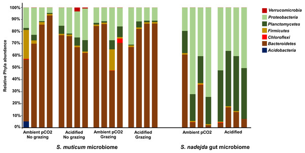 Host and treatment effects on associated bacteria phyla.