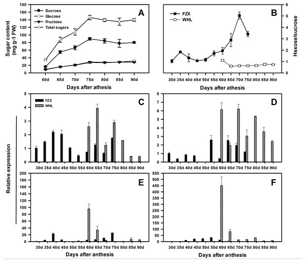 Changes in sugar contents and the expression of LcSPS1, LcSPS2, LcSPS3 and LcSPS4 at different developmental stage of litchi aril.