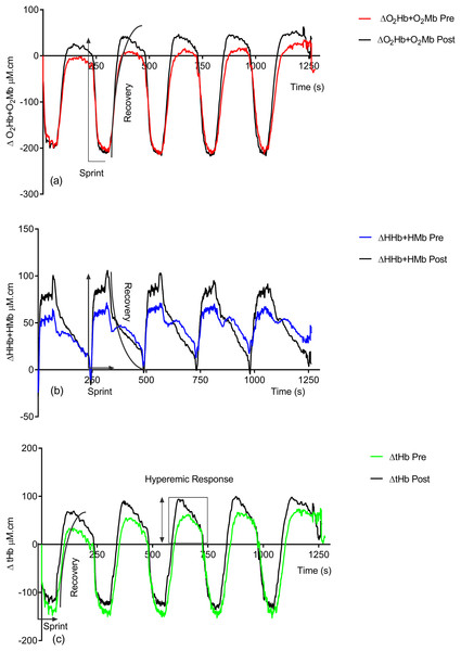Group pre vs. post-training hemoglobin overlay traces during the entire repeat swim sprint tests; (A) O2Hb + O2Mb, (B) HHb + HMb and (C) tHb.