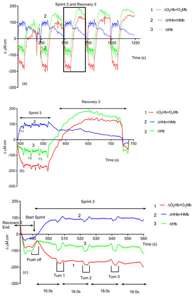 An individual subject's hemoglobin concentration changes displaying the entire sprint (A) and a single swim sprint on enhanced scales (B and C).
