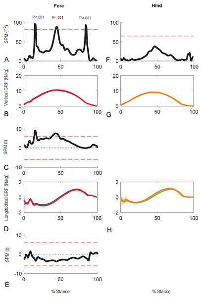 Results of statistical parametric mapping of ground reaction forces of trot overground for one horse (8 stance phases per limb).