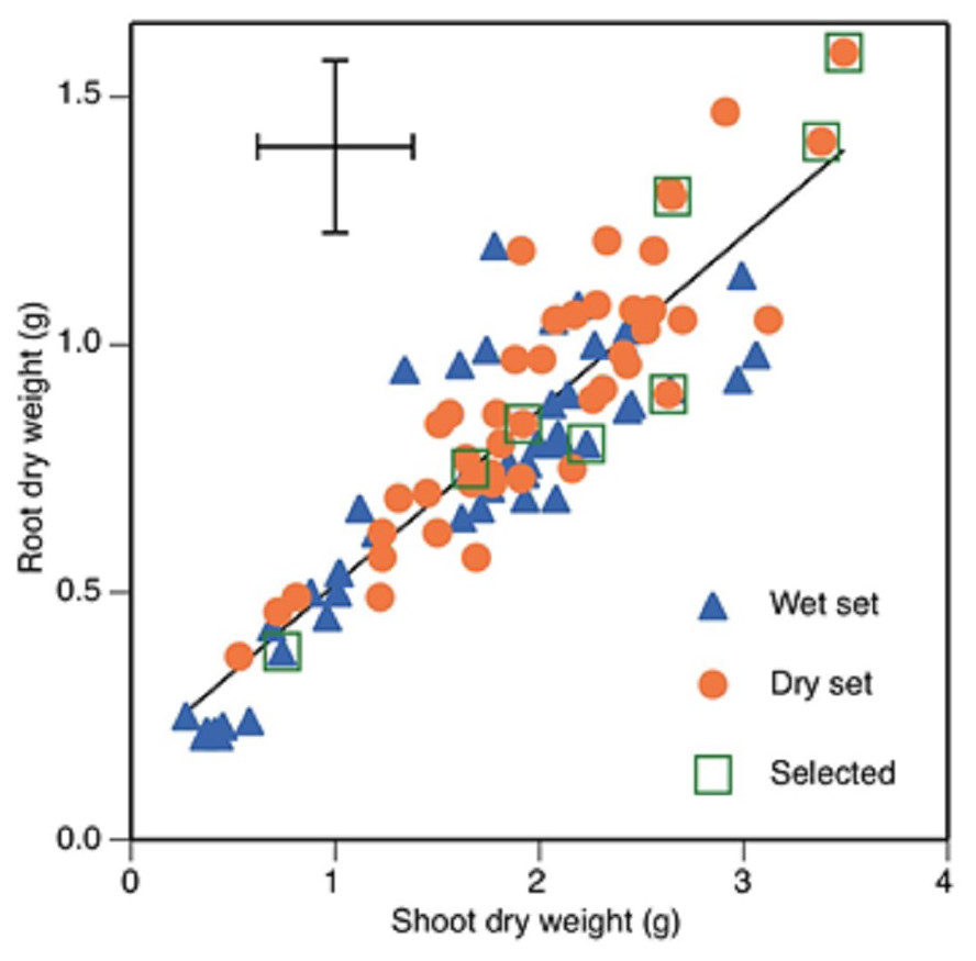 Diversity In Root Growth Responses To Moisture Deficit In Young Faba