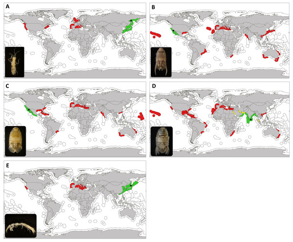 Updated worlwide distribution of marine exotic isopods found in marinas of the Iberian Peninsula and nearby waters.