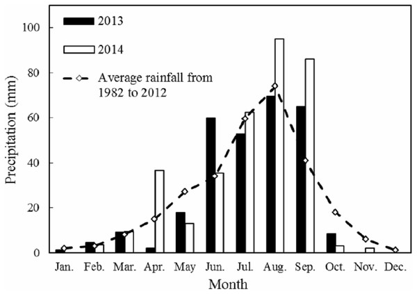 Monthly rainfall in 2013 and 2014 with the 31-year average (1982–2012) at the Yanchi Experimental Station, Ningxia Province, China.