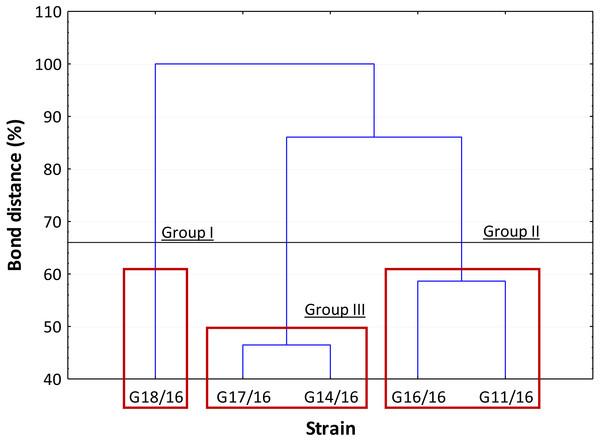 Cluster analysis between Petriella setifera strains.