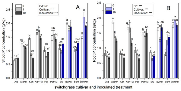 The P concentrations in the shoots (A) and roots (B) of five switchgrass cultivars with NM and M treatment under 0, 1 and 10 mg/kg Cd addition.