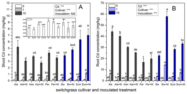 The Cd concentrations in the shoots (A) and roots (B) of five switchgrass cultivars with NM and M treatment under 0, 1 and 10 mg/kg Cd addition.