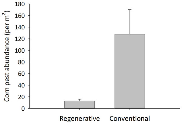 Insecticide-treated cornfields had higher pest abundance than untreated, regenerative cornfields.