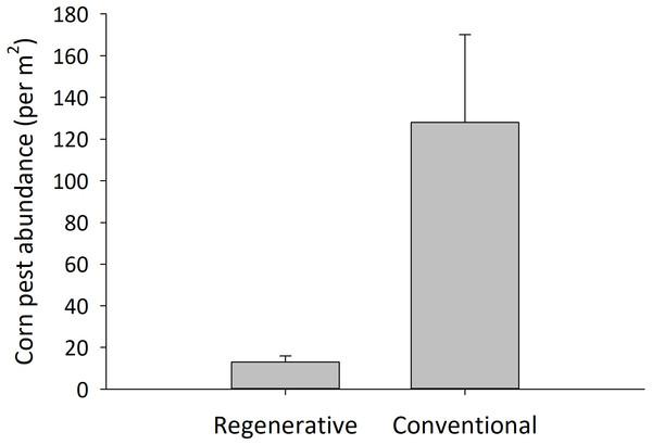 Insecticide-treated cornfields had higher pest abundance than untreated, regenerative cornfields.