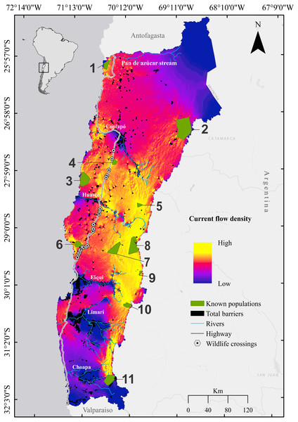 Cumulative current flow density map for the guanaco Lama guanicoe across Chile's Norte Chico.
