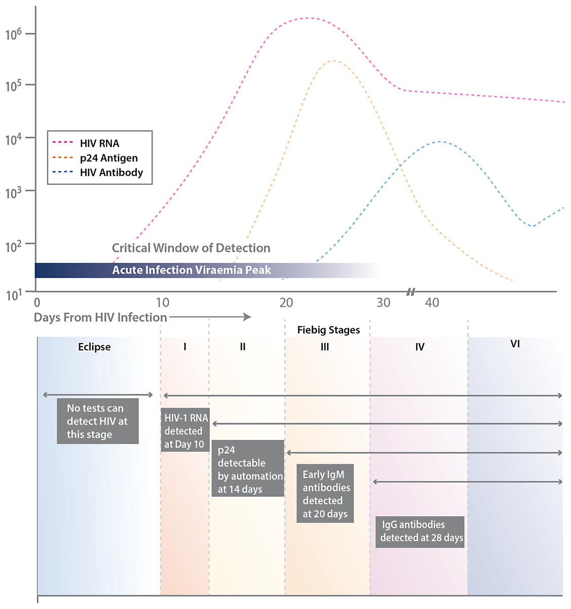 Human anti hiv igm detection by the oraquick advance rapid hiv 1 2 antibody test peerj - Antigene p24 periodo finestra ...