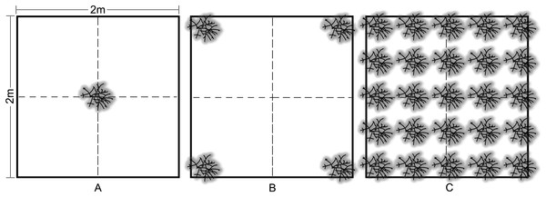 Acropora cervicornis outplant colony arrangement in 2 × 2 m density treatments: (A) low (1 coral/4 m2), (B) medium (4 corals/4 m2), and (C) high (25 corals/4 m2).