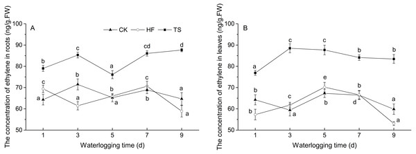 The change of ethylene concentrations under CK, HF and TS treatments.