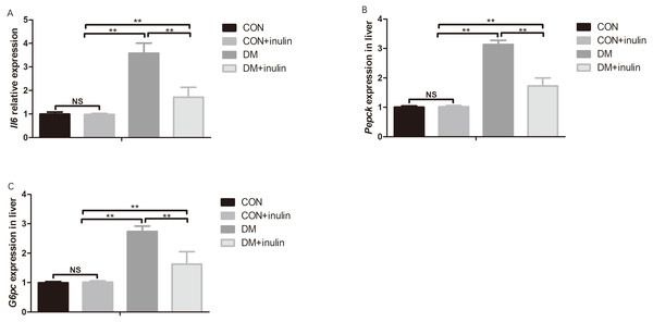 Pro-inflammatory cytokine and gluconeogenesis marker expression in white adipose tissue and liver.