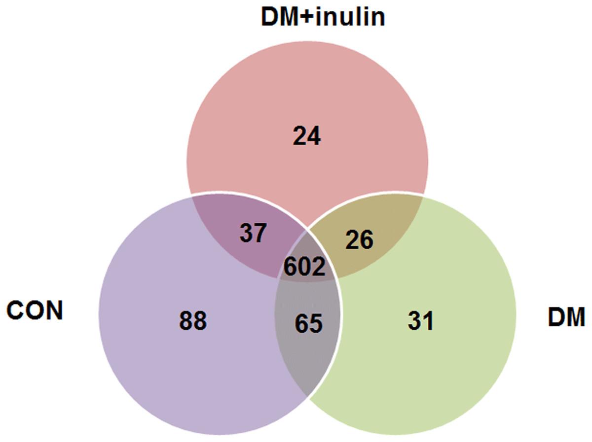 DM INULIN