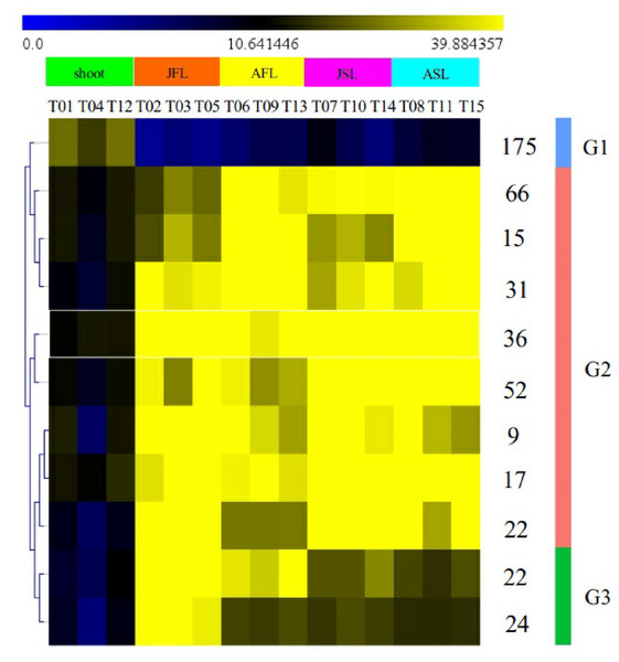 Dendrogram showing similarities in transcription factor expression profiles among samples.