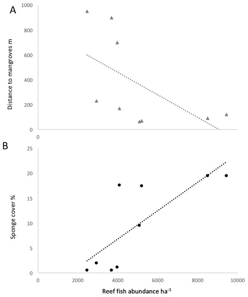 Correlation of reef fish abundance (w/o small-bodied fish) and (A) distance to mangroves or (B) sponge percent cover.