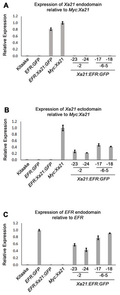 Xa21:EFR:GFP transcripts are expressed in stable transgenic lines.