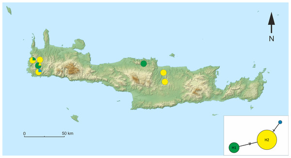 Map of the sampling sites on Crete with the median-joining haplotype network of Gammarus plaitisi sp. nov.