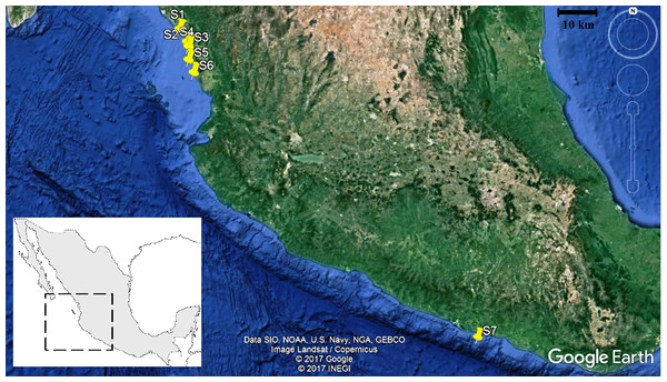 Location of the seven shrimp catches stations in the northeast and southeast of the Mexican Pacific.